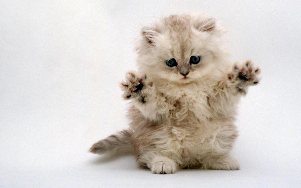 bear-kitten