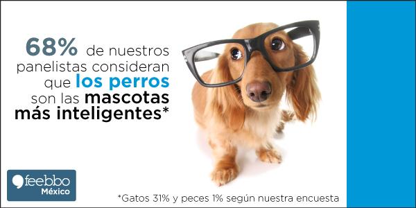 blog-infografia-feebbo-encuesta-perro-Vs-gato-Vs-pez_02
