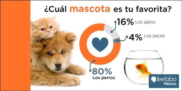 blog-infografia-feebbo-encuesta-perro-Vs-gato-Vs-pez_03