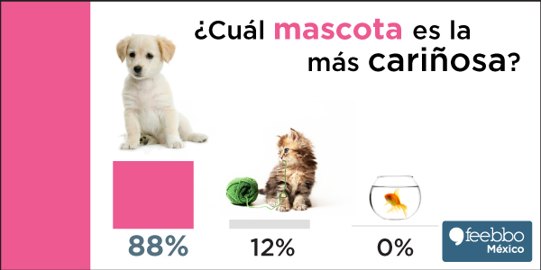 blog-infografia-feebbo-encuesta-perro-Vs-gato-Vs-pez_04